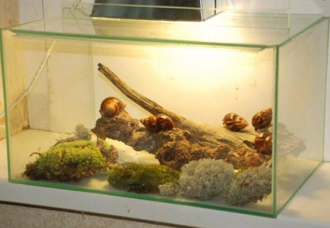 аквариум для улиток